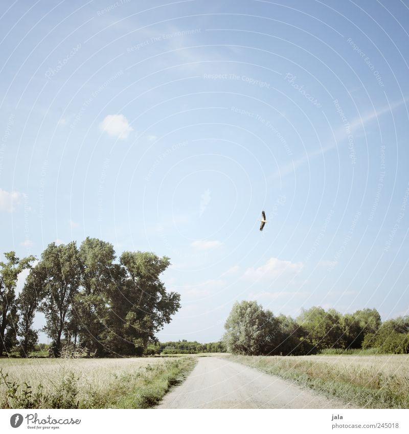 feldweg Umwelt Natur Landschaft Pflanze Tier Himmel Baum Gras Sträucher Feld Wege & Pfade Wildtier Vogel Storch 1 Unendlichkeit natürlich blau grün Farbfoto