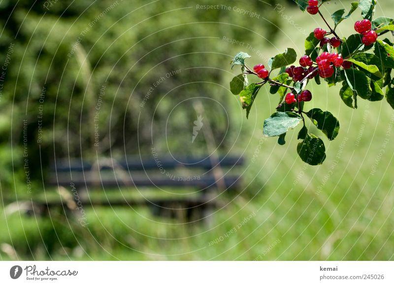 Giftig Natur grün rot Pflanze Sommer Blatt Wiese Gras Landschaft Umwelt leer Wachstum Sträucher Bank Ast hängen