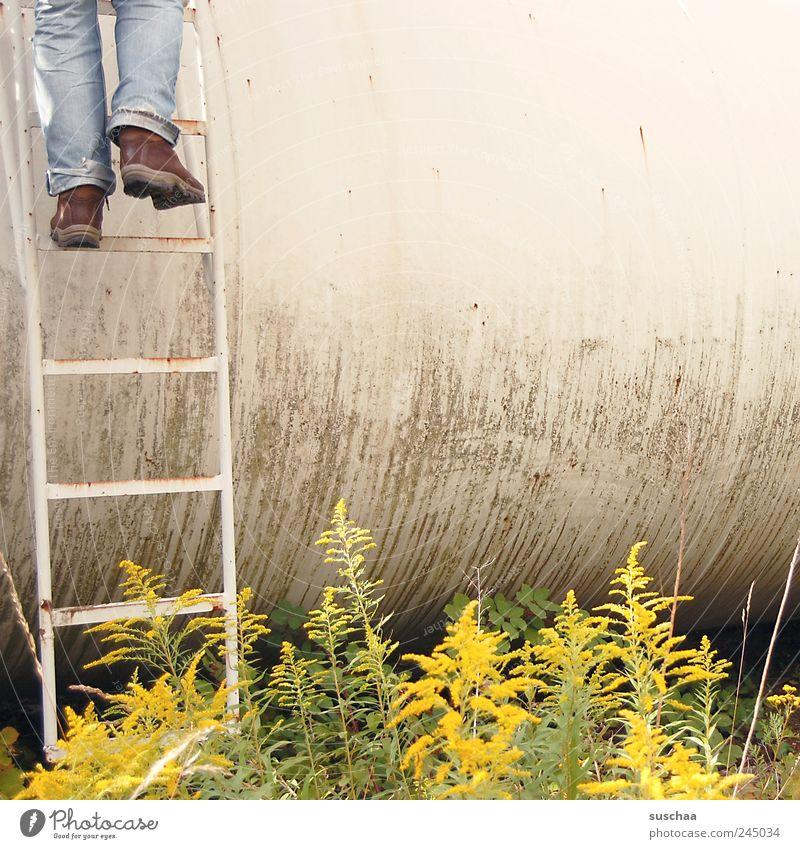 aufsteiger oder absteiger ... Pflanze Sommer Fuß Sträucher Verbote Farn Grünpflanze