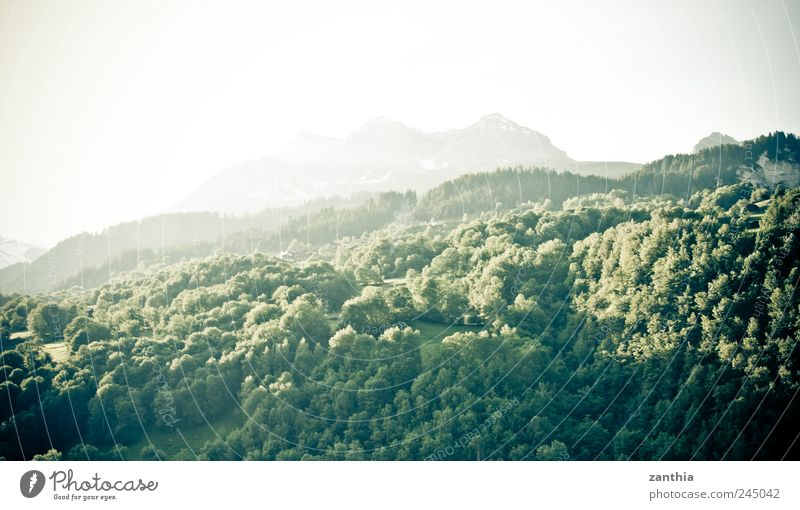 forest Natur Baum grün Sommer Tier Wald Erholung Berge u. Gebirge Landschaft Stimmung Felsen rein Schweiz Hügel Alpen Idylle