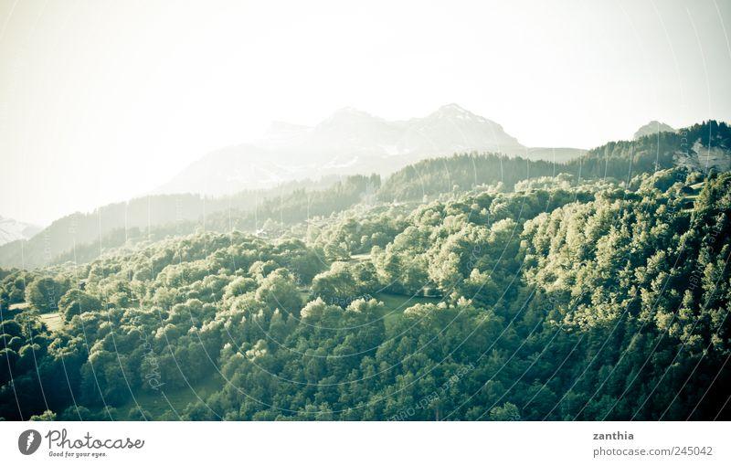 forest Natur Landschaft Tier Sonnenaufgang Sonnenuntergang Sonnenlicht Sommer Baum Wald Hügel Felsen Alpen Berge u. Gebirge Gipfel grün Erholung Idylle rein