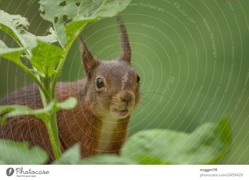 Eichhörnchen II Natur Sommer Pflanze grün Baum Tier Wald schwarz gelb Umwelt Herbst Frühling Glück Garten außergewöhnlich orange