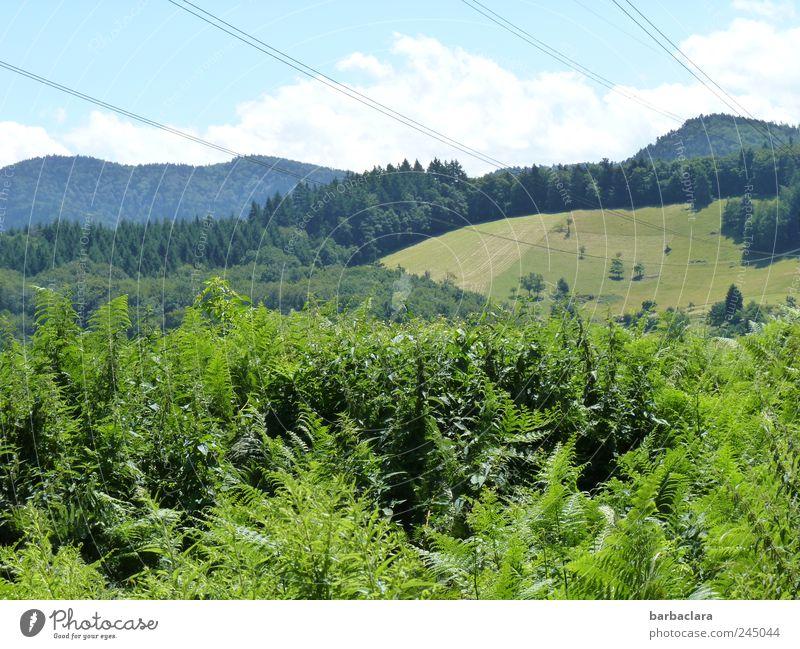 Zwischen Berg und Tal Himmel Natur blau grün Sommer Wald Landschaft Berge u. Gebirge Bewegung gehen natürlich wandern frei frisch Sträucher Hügel