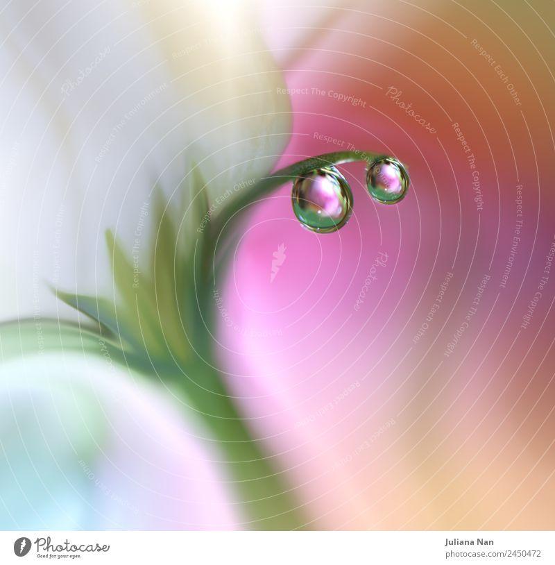 Natur Sommer Farbe Wasser Blume Erholung Lifestyle Liebe Glück Kunst Garten Stimmung Design elegant ästhetisch Kreativität