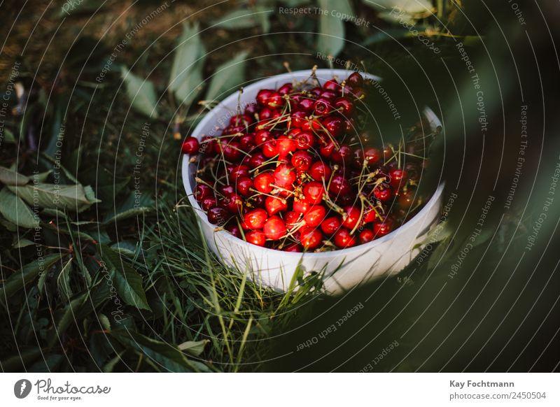 Schüssel voller reifer Kirschen im Sonnenlicht Natur Sommer Gesunde Ernährung schön Baum Erholung Leben Gesundheit Lebensmittel Garten Ausflug Frucht leuchten