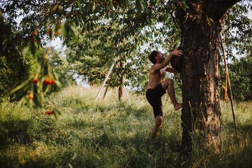 Junger Mann erklimmt einen Kirschbaum Lifestyle Freude Glück Wellness Leben Wohlgefühl Freizeit & Hobby Ferien & Urlaub & Reisen Ausflug Freiheit Sommer