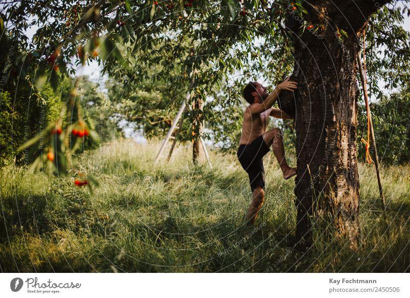 Junger Mann erklimmt einen Kirschbaum Mensch Natur Ferien & Urlaub & Reisen Sommer Pflanze Baum Freude Erwachsene Wärme Lifestyle Leben Sport Glück Garten
