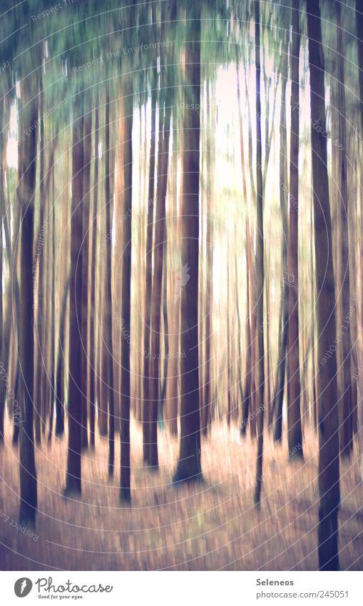 Stripes Natur Baum Ferien & Urlaub & Reisen Pflanze Sommer Wald Umwelt Landschaft Freiheit hell Linie Ausflug Streifen abstrakt
