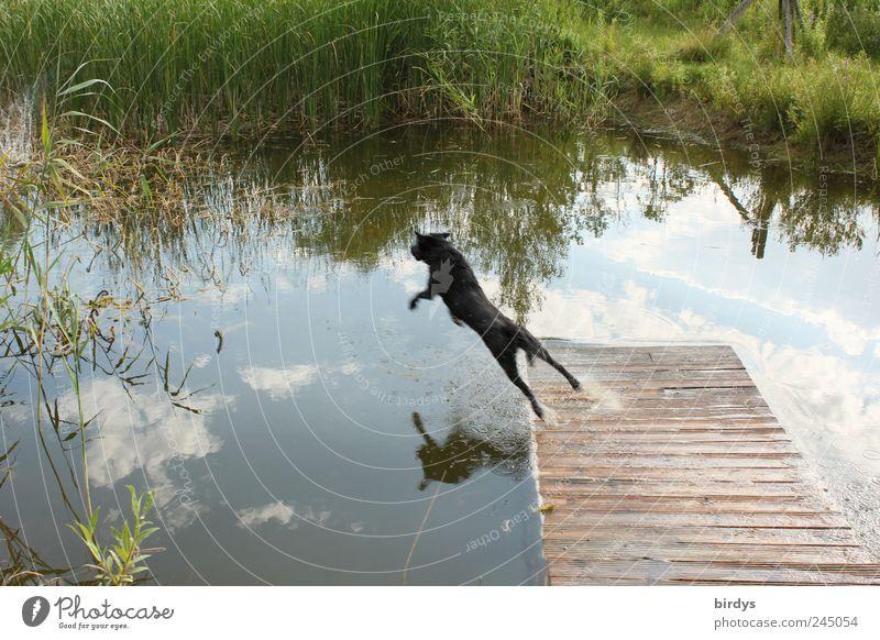 Flugstudie von Hunden im Steigflug Pflanze Wasser Himmel Teich Haustier 1 Tier fliegen Mut Leben Bewegung Entschlossenheit Freude Lebensfreude Natur