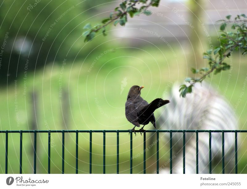 Hallo Marty! Natur Baum Pflanze Blatt Tier hell Umwelt Vogel nah natürlich Zoo Wildtier Zaun Säugetier Zebra Amsel