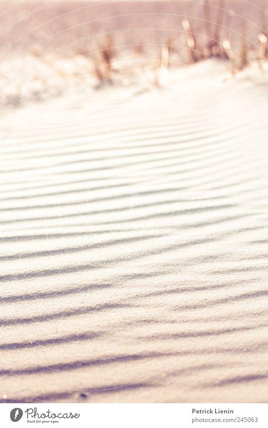 Spiekeroog | Sandrausch Natur Strand Ferien & Urlaub & Reisen Meer Einsamkeit Ferne Freiheit Landschaft Umwelt Sand Küste Stimmung hell Wetter Erde Zufriedenheit
