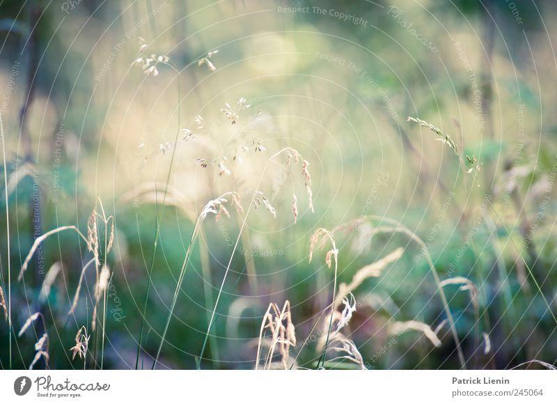 Sunday Sun Natur Pflanze Sommer Wiese Freiheit Umwelt Gras Stimmung Wetter Zufriedenheit ästhetisch Kitsch geheimnisvoll Idylle Schönes Wetter Idee