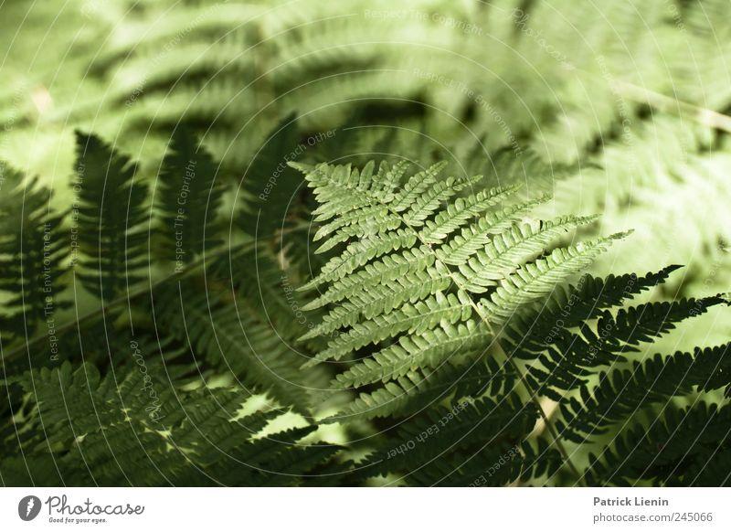 Can´t Stop Rock `n´ Roll Natur blau grün Pflanze Sommer Umwelt Zufriedenheit Fröhlichkeit Freundlichkeit Leidenschaft Mut Symmetrie Optimismus Farn Grünpflanze