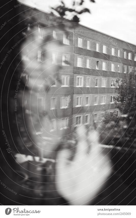 get lost in the city Junge Frau Jugendliche Erwachsene 1 Mensch 18-30 Jahre Haus Gebäude Wohnhochhaus Wohnsiedlung Plattenbau Fassade Fenster beobachten