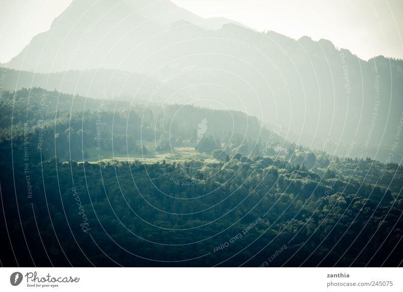 forest Natur Sommer Ferien & Urlaub & Reisen Tier Wald Erholung Berge u. Gebirge Landschaft Umwelt hell Zufriedenheit Felsen Schweiz Hügel Alpen Idylle