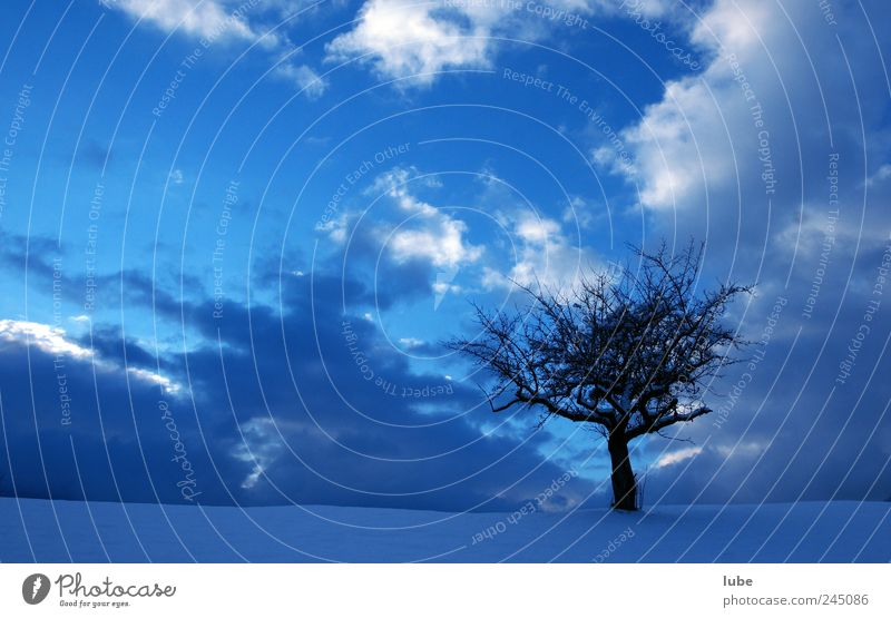 Baum mit blauem Hintergrund Natur Himmel Baum blau Winter Schnee Landschaft Stimmung Umwelt Wetter Trauer Klima einzeln Nachthimmel Gewitterwolken Winterurlaub