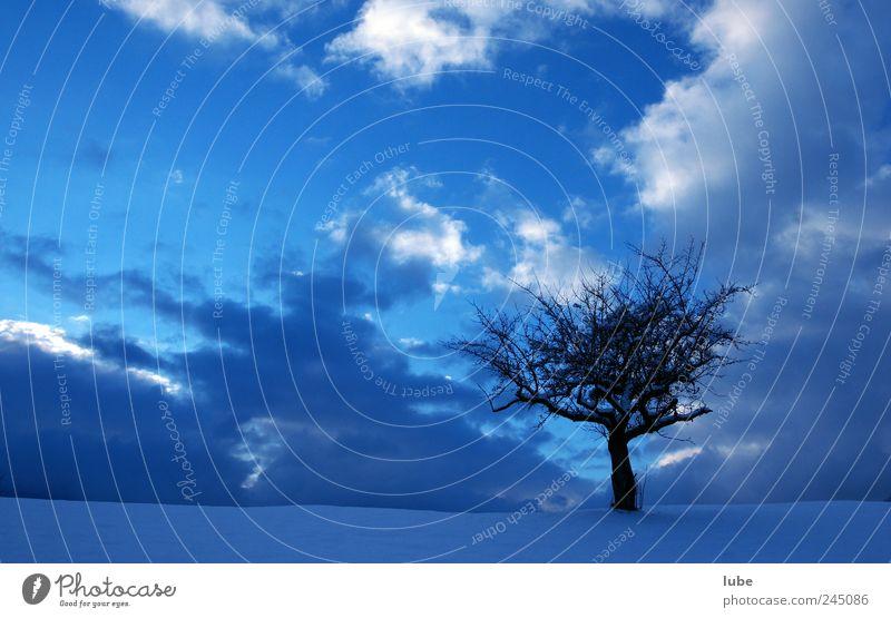 Baum mit blauem Hintergrund Natur Himmel Winter Schnee Landschaft Stimmung Umwelt Wetter Trauer Klima einzeln Nachthimmel Gewitterwolken Winterurlaub