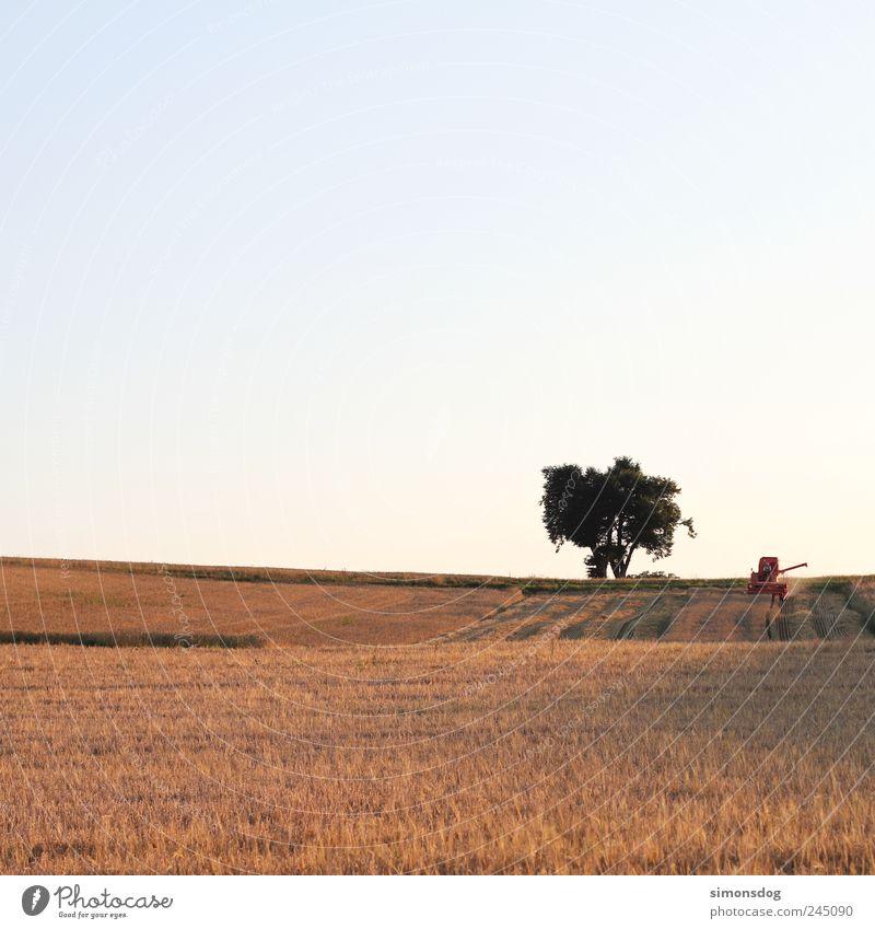 hochsommer Landschaft Wolkenloser Himmel Sommer Baum Nutzpflanze Feld Arbeit & Erwerbstätigkeit nachhaltig natürlich Energie Idylle Vergänglichkeit