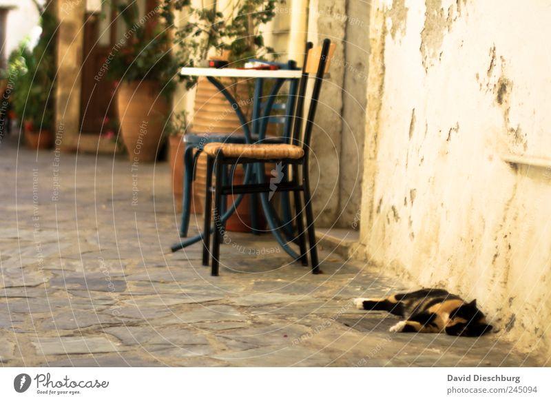 Idylle Katze Sommer Tier ruhig Erholung Wand braun Fassade Tisch schlafen Pause Stuhl Siesta Mittagsschlaf Trägheit faulenzen