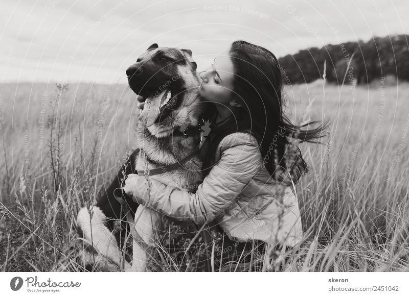 Mädchen umarmt einen Hund auf dem Herbstfeld Mensch feminin Junge Frau Jugendliche Erwachsene 1 18-30 Jahre Natur Landschaft Schönes Wetter Garten Park Feld