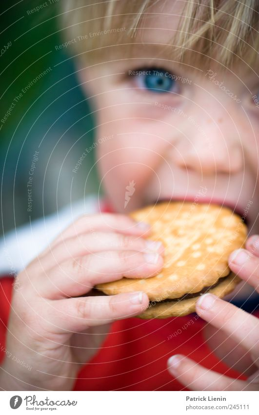 Keeekseee! Mensch Kind Hand schön Auge Junge Essen Kindheit Freizeit & Hobby Lebensmittel Ernährung Finger süß Pause Appetit & Hunger Süßwaren