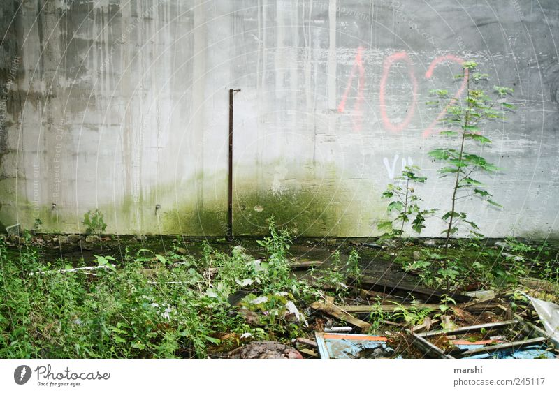 102 grün Pflanze grau Mauer Umwelt dreckig Erde Beton trist Müll Grünspan