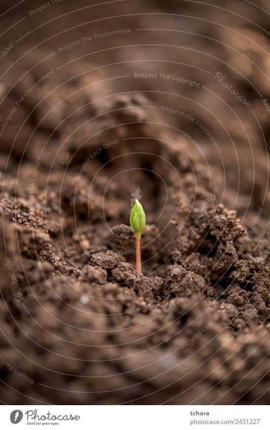 Neue Anlage - neues Leben Gemüse Kaffee Geld Garten Gartenarbeit Kapitalwirtschaft Business Umwelt Natur Pflanze Erde Frühling Baum Blatt Wachstum frisch klein