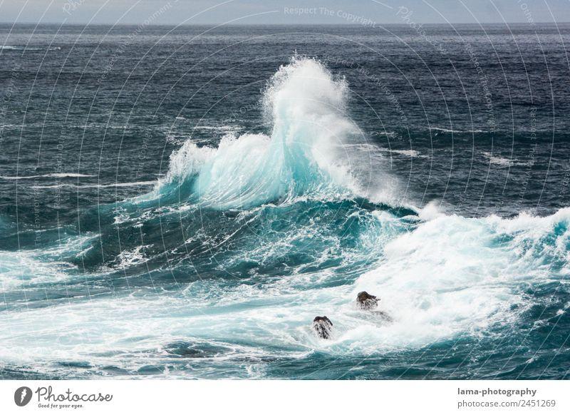 Making Waves Natur Urelemente Wasser Wind Sturm Wellen Küste Meer Atlantik Gischt Brandung Madeira wild blau Umweltschutz Farbfoto Außenaufnahme