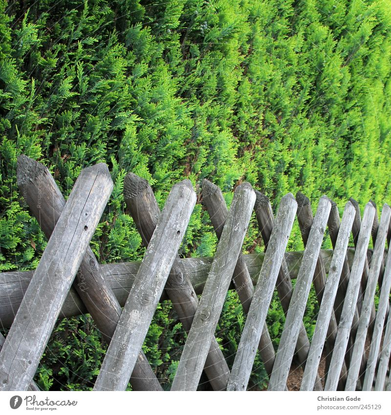 Grundstücksgrenze grün Straße Holz Garten braun Rücken Sträucher Quadrat Bürgersteig Zaun Holzbrett Barriere Grünpflanze Grundstück Gartenzaun Zaunpfahl