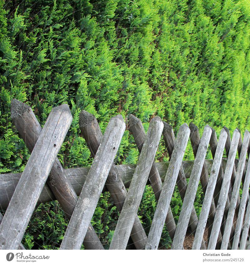Grundstücksgrenze Holz braun Jägerzaun Zaun Zaunpfahl Zaunlücke Quadrat Holzbrett Sträucher grün Grünpflanze Rücken Garten Gartenzaun Barriere Straße