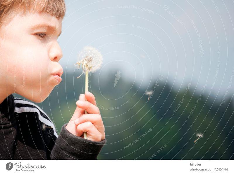 Dem Sommer geht die Puste aus! Mensch grün schwarz Junge Kopf braun Kindheit maskulin Löwenzahn blasen Schweben Samen 3-8 Jahre Blume