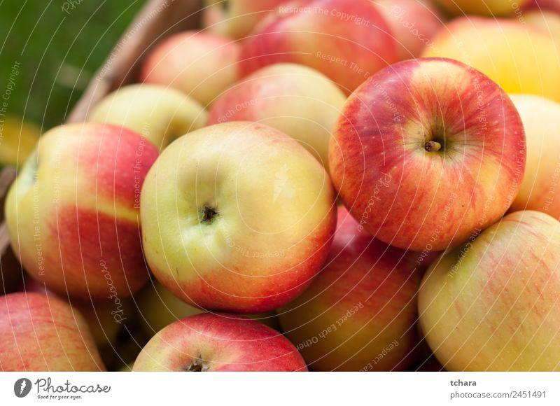 Rote und gelbe reife Äpfel Frucht Apfel Ernährung Diät Natur Herbst Baum Blatt Container Verpackung Holz alt frisch lecker natürlich gold grün rot Farbe Ernte
