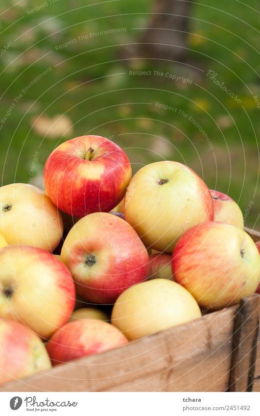 Natur alt Farbe grün Baum rot Blatt gelb Herbst natürlich Holz Frucht Ernährung gold frisch Boden