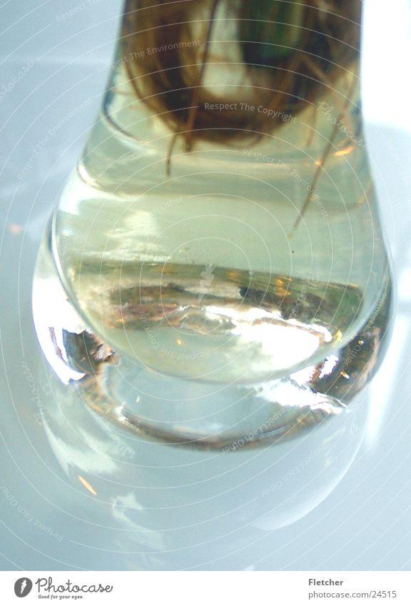 Vase Natur Wasser Pflanze hell rund durchsichtig Vase Wurzel