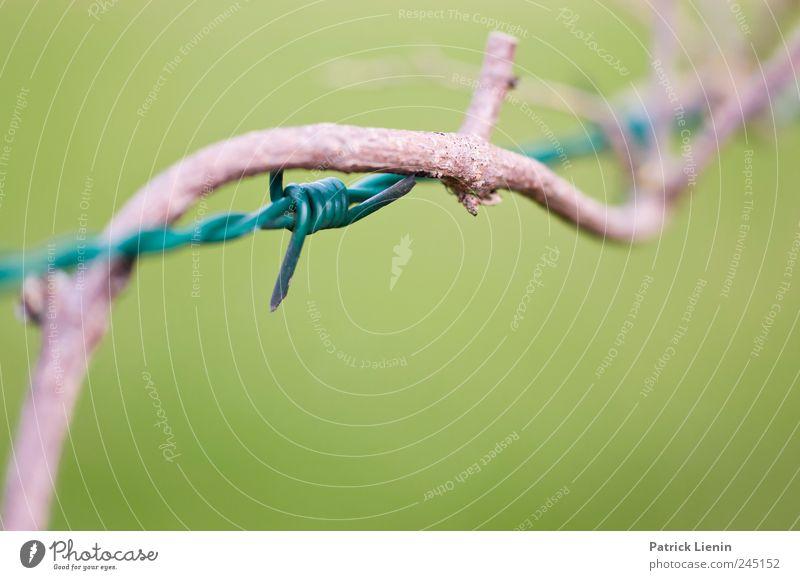 War and Peace Natur grün Pflanze Umwelt Holz Zufriedenheit Angst natürlich Wachstum ästhetisch Wandel & Veränderung bedrohlich Spitze Schutz Zeichen
