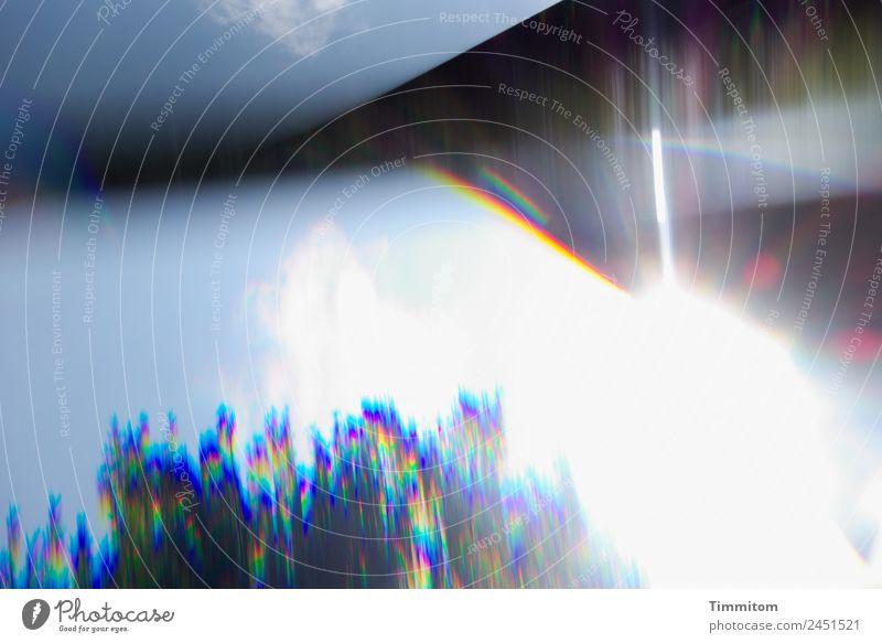 Sommer im Garten Umwelt Natur Himmel Wolken Sonne Sonnenlicht Schönes Wetter Baum blau weiß Reflexion & Spiegelung Schatten Spektralfarbe Farbfoto Außenaufnahme