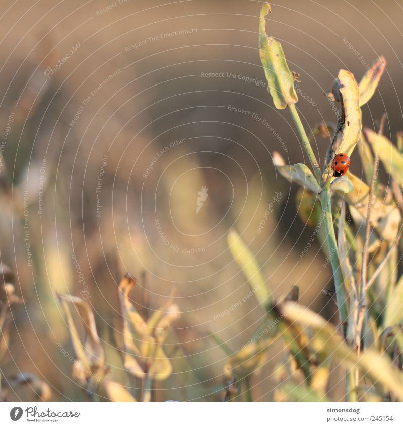 sonnenplatz Natur Pflanze Blatt Einsamkeit Tier Wiese Bewegung Landschaft Wärme Feld sitzen Sträucher natürlich Insekt Idylle Warmherzigkeit