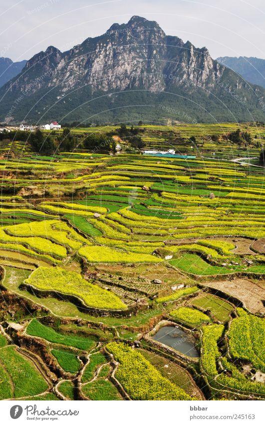 Himmel Natur Ferien & Urlaub & Reisen Pflanze grün Farbe Blume Landschaft Berge u. Gebirge Umwelt gelb Frühling Blüte Wiese Gras natürlich