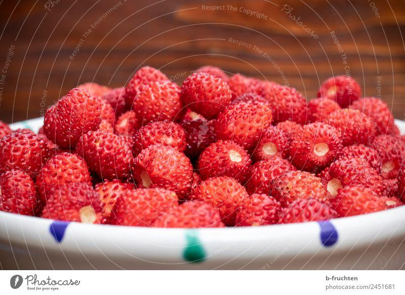 Jede Menge Walderdbeeren Frucht Bioprodukte Vegetarische Ernährung Sommer frisch rot genießen Wald-Erdbeere Schalen & Schüsseln Erdbeeren klein Sammlung Ernte