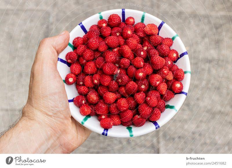 Walderdbeeren Frucht Bioprodukte Schalen & Schüsseln Mann Erwachsene Hand Sommer festhalten rot genießen Wald-Erdbeere ansammeln Ernte pflücken Geschmackssinn