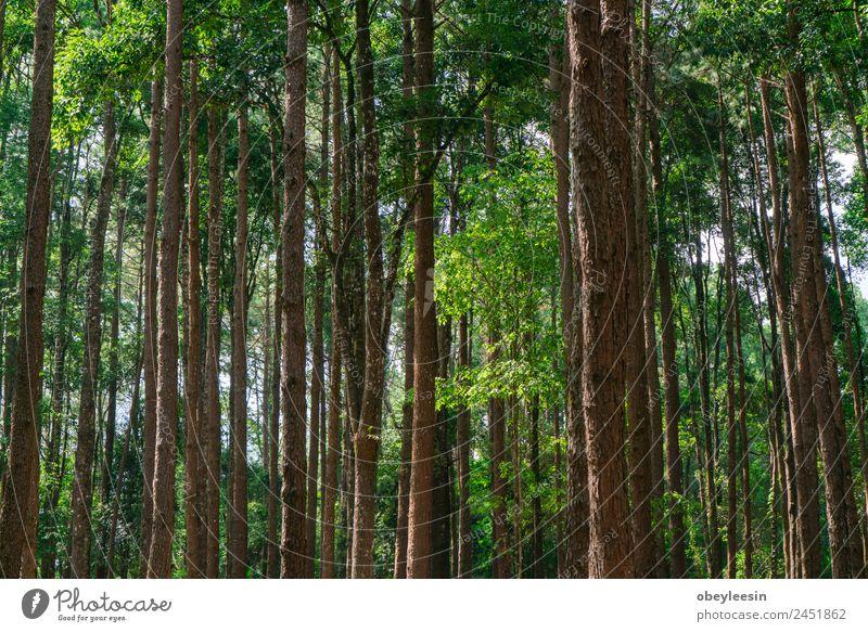 Viele Kiefern im Park. Sauber sortiert. Sonne Berge u. Gebirge Natur Landschaft Horizont Baum Tropfen Wachstum natürlich wild grün schwarz konservieren robust