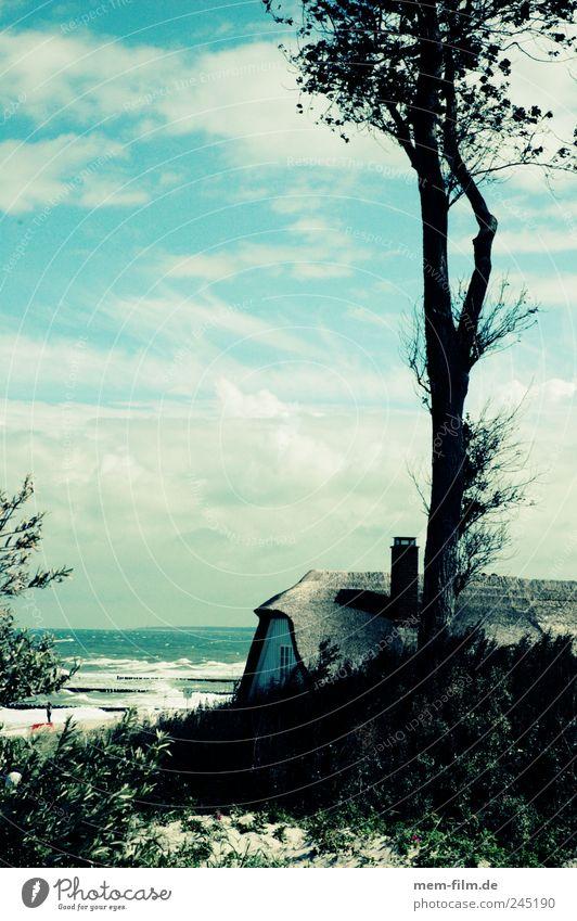 hinter den dühnen Baum Ferien & Urlaub & Reisen Küste Ostsee Brandung Darß Mecklenburg-Vorpommern Ferienhaus Haus Textfreiraum links Traumhaus Wolkenhimmel
