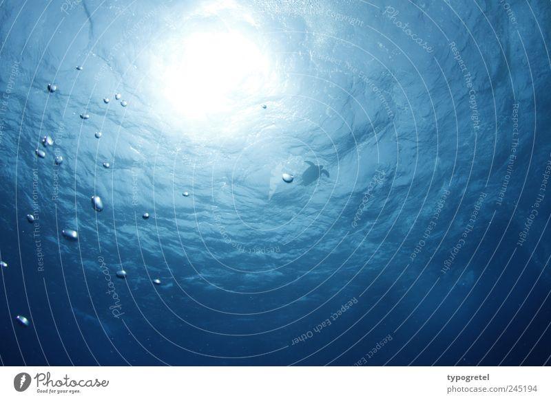 Auftauchen & Luftschnappen Natur blau Wasser Ferien & Urlaub & Reisen Meer ruhig Ferne Wellen Schwimmen & Baden Wildtier Ereignisse Tiefenschärfe durchsichtig