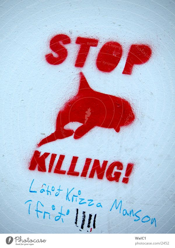 Graffiti Europa Information Island Mitteilung Delphine Wal