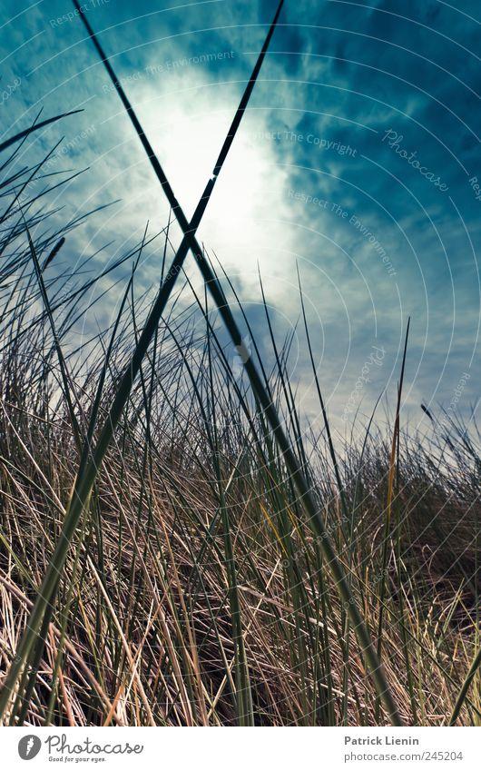 X Himmel Natur Pflanze Wolken Gras grau Landschaft Luft Umwelt Stimmung Wetter Erde hoch Geschwindigkeit Klima Wut