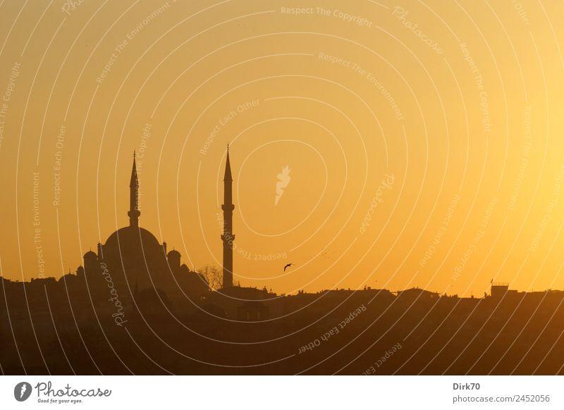 Moschee in Istanbul Ferien & Urlaub & Reisen Stadt Ferne Wärme Religion & Glaube Frühling Tourismus Vogel leuchten ästhetisch Kultur Schönes Wetter fantastisch