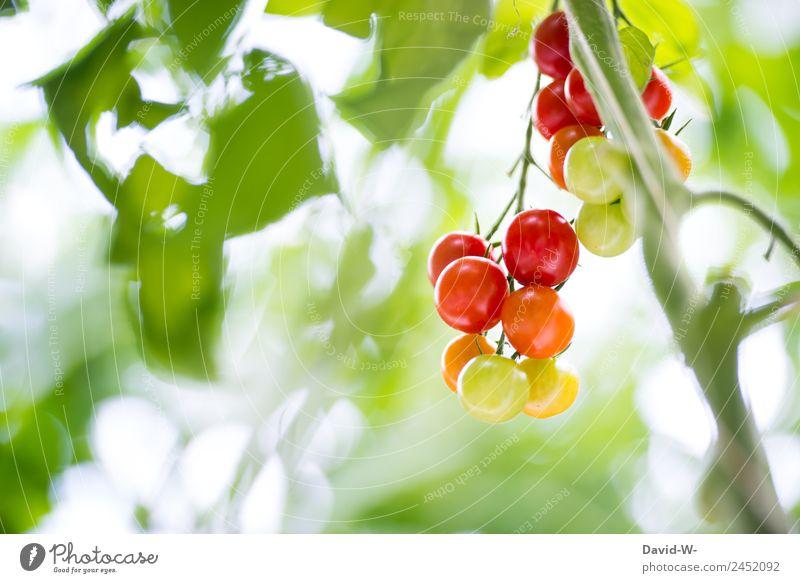 Tomaten Lebensmittel Gemüse Salat Salatbeilage Ernährung Bioprodukte Vegetarische Ernährung Diät elegant Gesundheit Gesundheitswesen Essen Erntedankfest Umwelt