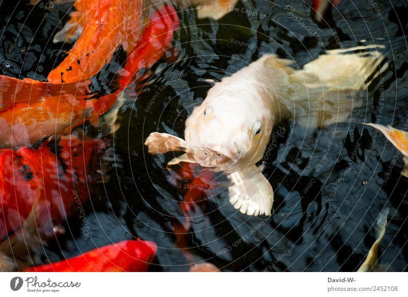 Kopf aus dem Wasser Kunst Umwelt Natur Tier Sommer Klima Klimawandel Wetter Schönes Wetter Dürre Teich See Fluss Fisch Zoo Aquarium Tiergruppe Schwarm