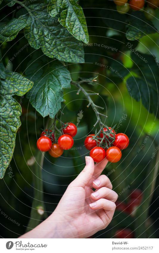 lecker und gesund Mensch Natur Sommer Pflanze Hand rot Gesundheit Umwelt natürlich feminin klein Kunst Wachstum Schönes Wetter Finger Italien