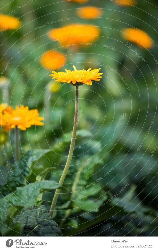 Gelbes Blümchen Kunst Kunstwerk Gemälde Umwelt Natur Landschaft Pflanze Sonne Sonnenlicht Sommer Klima Wetter Schönes Wetter Dürre Blume Grünpflanze Garten Park